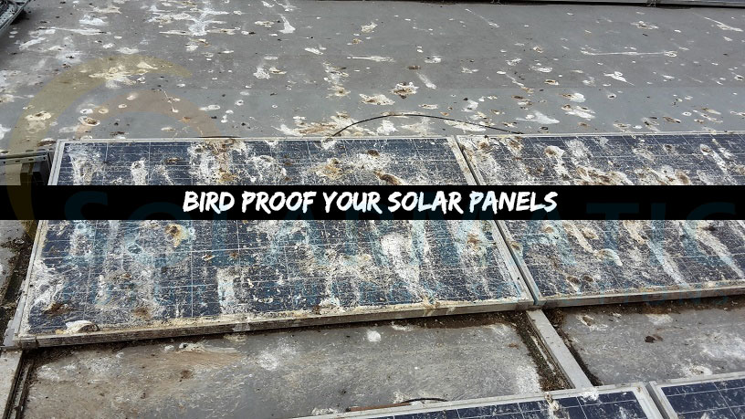 Bird proofing for solar panels